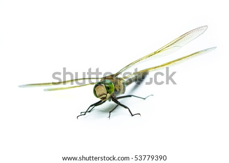 dragonfly on an isolated background - stock photo