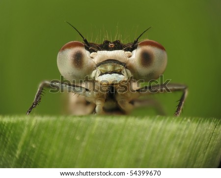 Dragonfly on blade of grass - stock photo