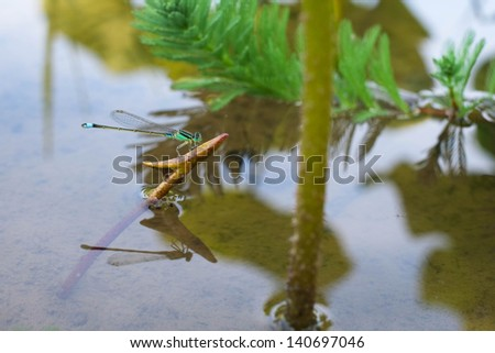 Dragonfly on  green plant - stock photo