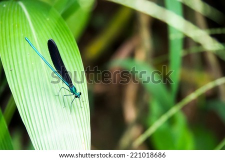 dragonfly on the green leaf