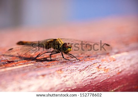 Dragonfly on the red wooden surface - stock photo