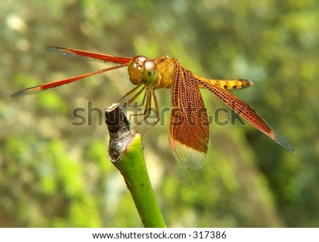 Dragonfly on trunk - stock photo