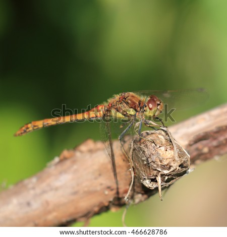 Dragonfly perched on a dead branch