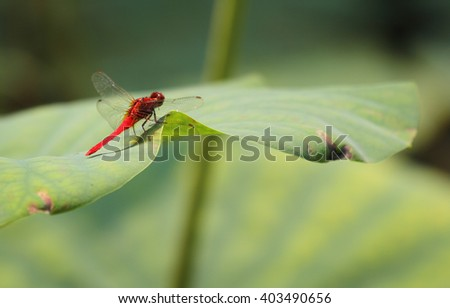 Dragonfly rest on lotus leaf - stock photo