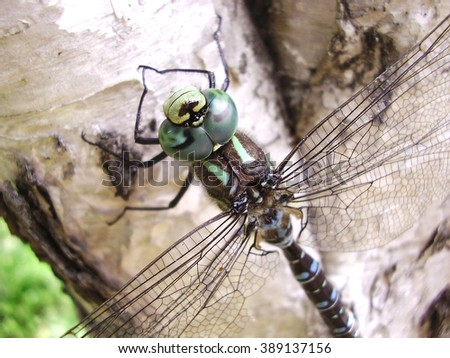 Dragonfly sitting on a tree trunk - stock photo
