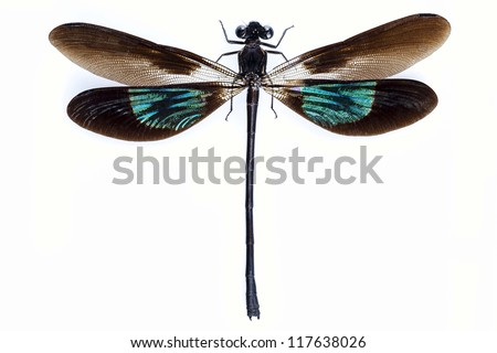 Dragonfly with green and brown wings isolated on white background - stock photo