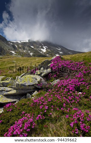 Dramatic alpine scenery and pink rhododendron blooms - stock photo