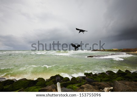 Dramatic clouds of the storm and birds - selective focus - stock photo