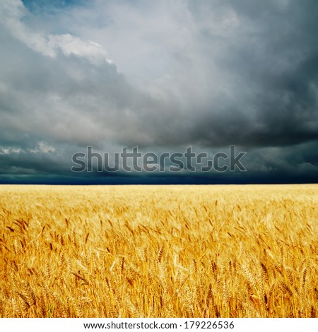 dramatic clouds over golden field. rain before