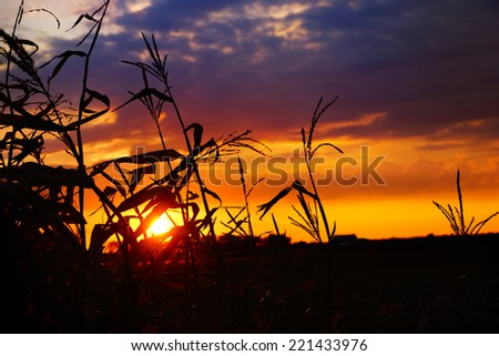 Dramatic colorful sunset corn field, Quebec, Canada - stock photo