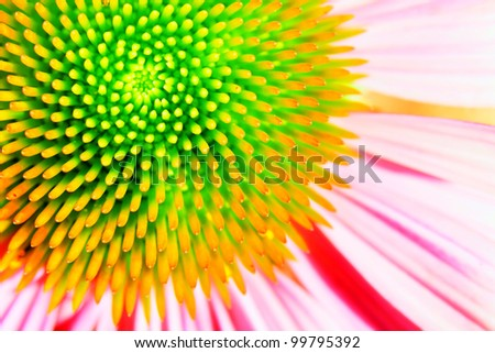 Dramatic over the top color saturation of a blossoming echinacea or purple coneflower, beautiful mix of neon green, yellow and very bright orange and pink. - stock photo