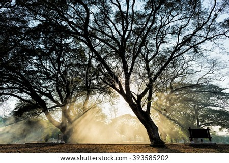 Dramatic silhouette of big trees in a park with sunset and sunbeam through thick mist at Ayutthaya historical park, Thailand. - stock photo