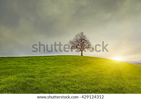Dramatic sky and sunrise over old lonely tree - Lonely tree  - stock photo