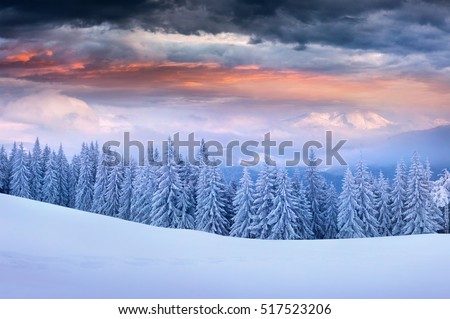 Dramatic winter sunrise in Carpathian mountains with snow covered fir trees. Colorful outdoor scene, Happy New Year celebration concept. Artistic style post processed photo.