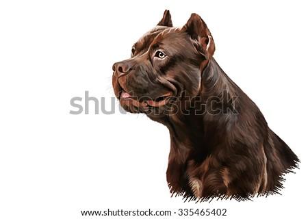 Drawing American Staffordshire Terrier portrait oil painting on white background - stock photo