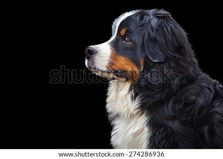 Drawing Bernese Mountain Dog, portrait on a black background