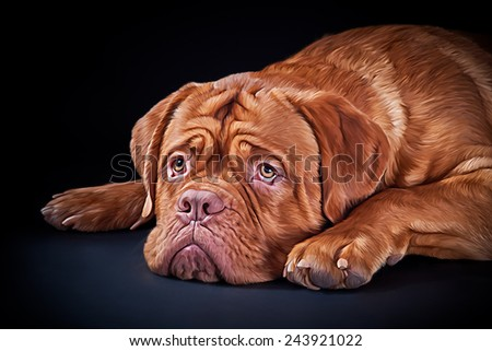 Drawing breed dog  Dogue de Bordeaux, Hand-drawn - stock photo