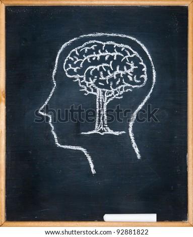 Drawing chalk board of inside head - stock photo