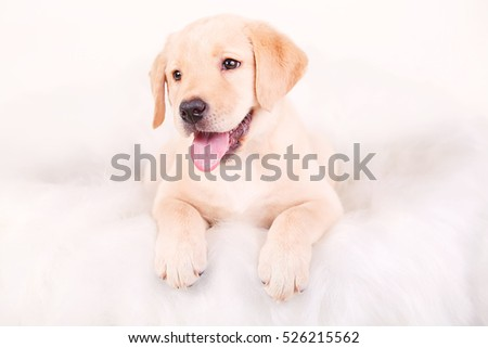 Drawing dog, puppy Labrador, portrait on a white background