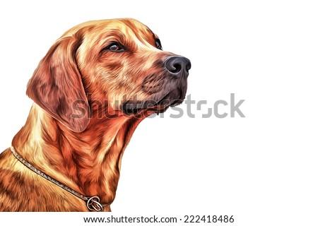 Drawing Dog Rhodesian Ridgeback - stock photo