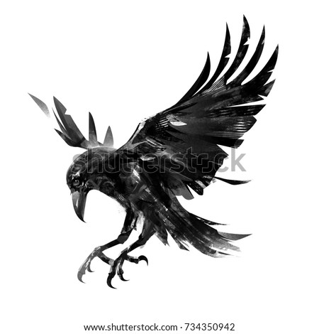 drawing flying crow on white background isolated sketch of a bird