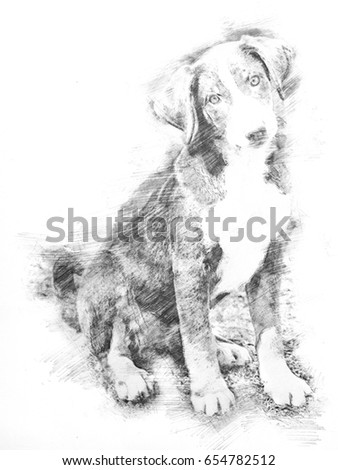 Drawing of a Appenzeller puppy sitting and waiting