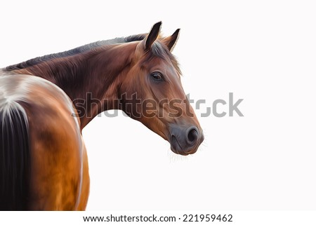 Drawing of a horse, portrait, on a white background - stock photo