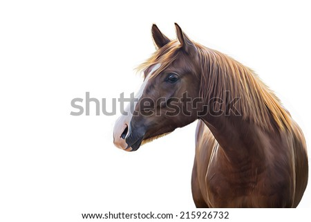 Drawing of a horse, red, portrait, white background - stock photo