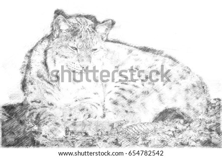 Drawing of a lying lynx in the sun and relaxing