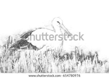 Drawing of a standing stork in the middle of the reed