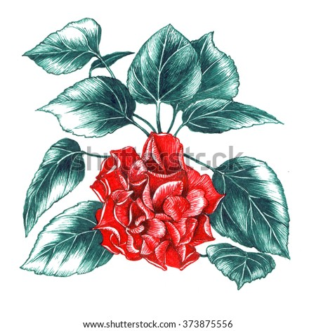 Drawing of rose flower - stock photo