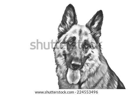 Drawing of the dog German Shepherd Dog - stock photo
