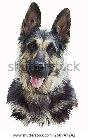 Drawing of the dog German Shepherd Dog, portrait  oil painting on a white background