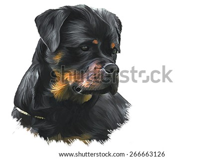 Drawing of the dog rottweiler, tricolor,portrait, oil painting on a white background