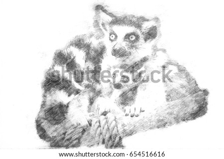 Drawing of two lemurs sit cuddling together