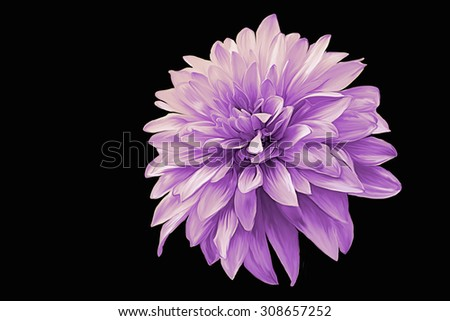 Drawing oil painting dahlia flower on a black background - stock photo