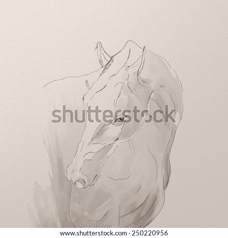 Drawing portrait of akhal-teke horse - stock photo