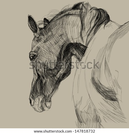 Drawing portrait of horse. One of step - stock photo