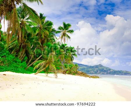 Dream Jungle Summertime - stock photo