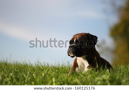 dreaming dog - stock photo