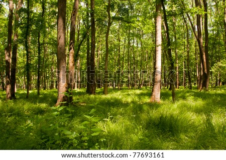 Dreamlike forest landscape with green plants - stock photo