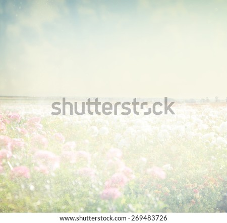 dreamy abstract photo of wild flower field and bright bokeh lights. cross proccess effect  - stock photo