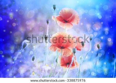 Dreamy artistic poppies with bokeh lights  - stock photo