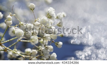 Dreamy Artistic white gypsophils flower, wedding, romantic