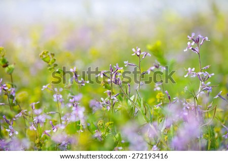 dreamy beautiful background sunny field with flowers summer or spring with soft blur bokeh - stock photo