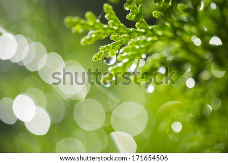 Dreamy bokeh and green branches with dew drops in morning light. - stock photo