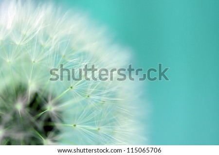 Dreamy dandelion macro - stock photo