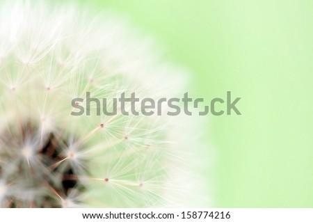 Dreamy dandelion macro on light green - stock photo