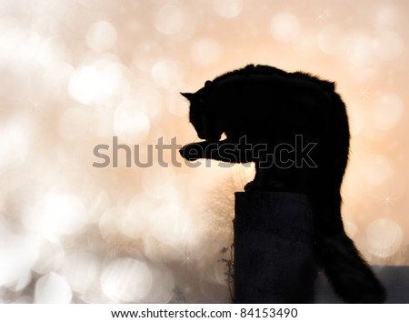 Dreamy image of a black long haired cat in silhouette washing his paw - stock photo