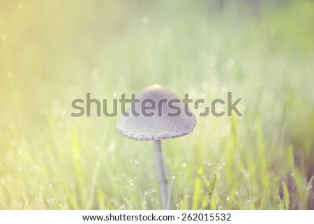 Dreamy image of a fungus under a soft morning light - stock photo